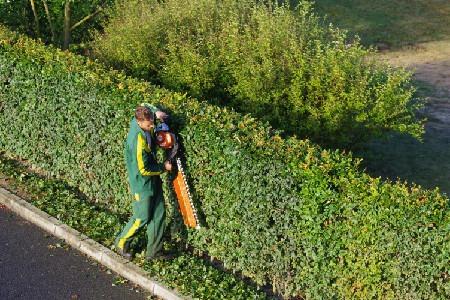 Entretien de haies et d'arbustes